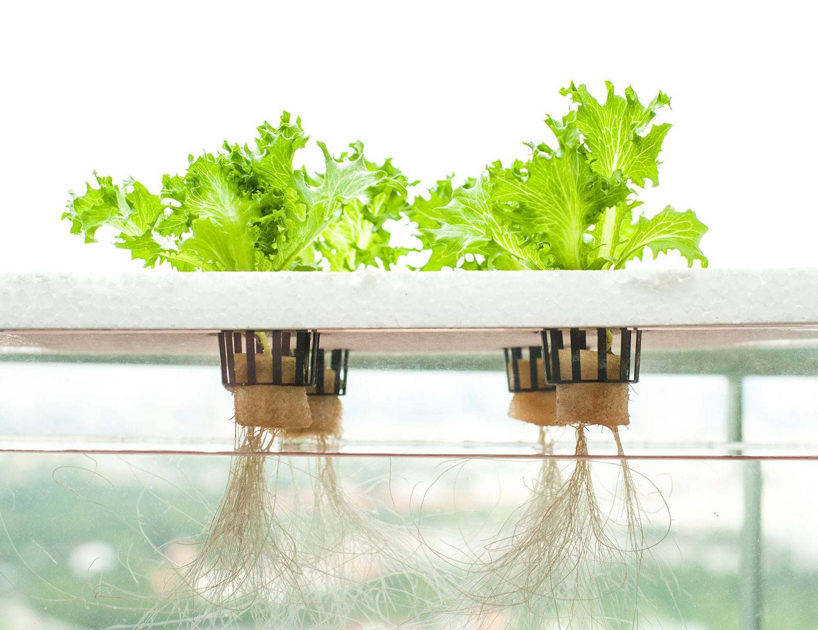 Best Hydroponic Air Pumps for Growth of Your Plants