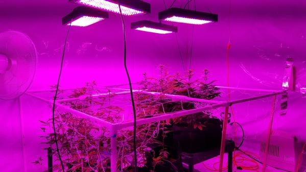 15 Best LED Grow Lights for cannabis and weed.